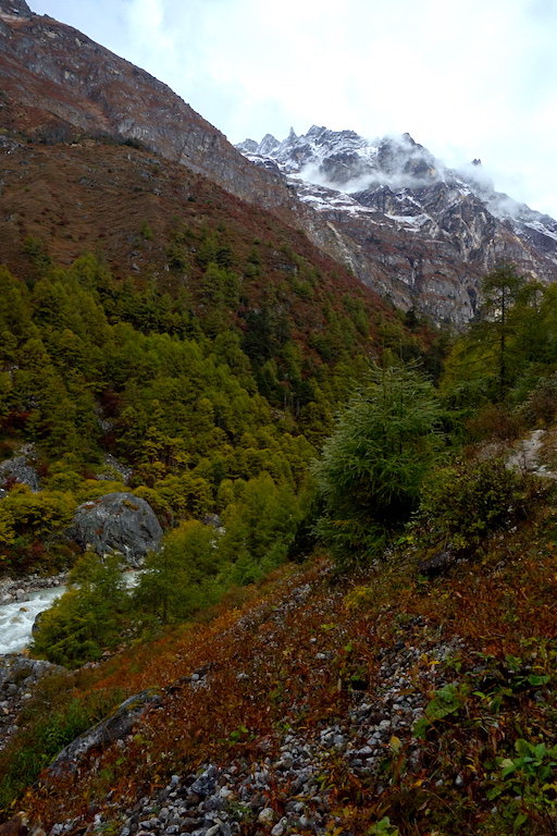 Valley of larch trees and fall colours just up from Ghunsa.